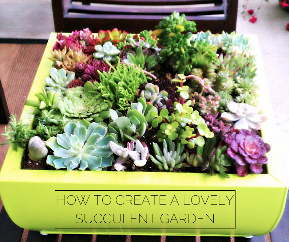 {How to Create a Lovely Succulent Garden}