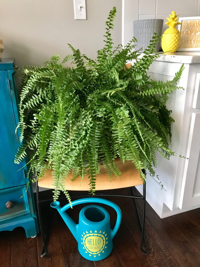 Fern and Watering Can | My Life Space Moments